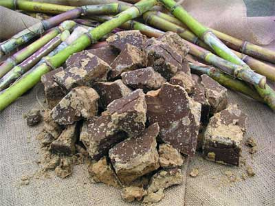 黒糖焼酎 ネリヤカナヤに使われる、宇検村産の黒糖、サトウキビ