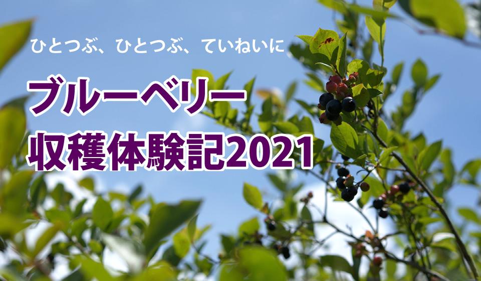 リキュールに使われる!? 霧島ブルーベリー摘み体験記 2021年夏